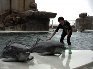 イルカを恐る恐る触るかっしー